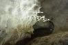 На своде характерные следы формирования пещеры в зоне полного затопления
